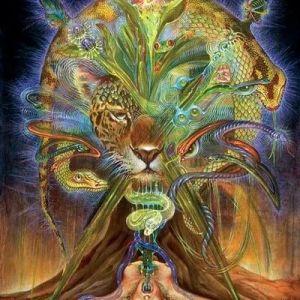 Xamanismo Coletivo