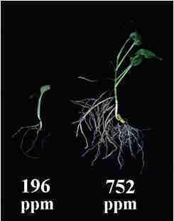 PlantPPM2.jpg